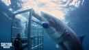The Boldest Bites | Shark Week's Most Intense Encounters