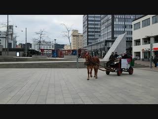 Финская лошадка работает оленем у Йоулупукки