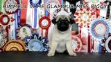 Himmell Vahe Glamour Miss Piggy