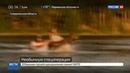 Новости на Россия 24 • Упрямого лося весь день выгоняли из озера