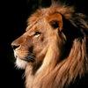 Турнир Lion's Head в ирландском пабе!