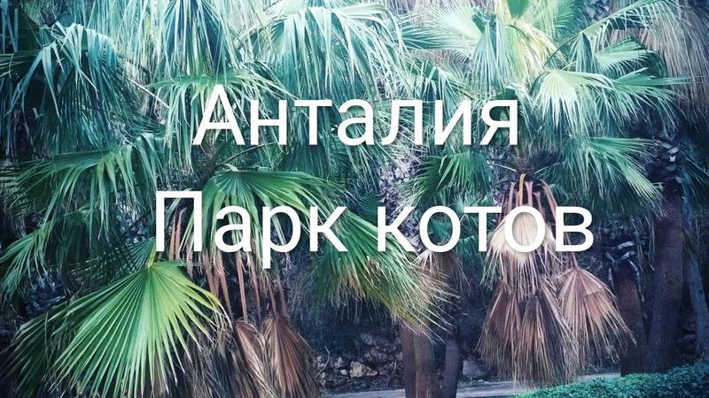 Анталия-парк Ататюрк. Парк котов. Antalya - Ataturk Park. park cats