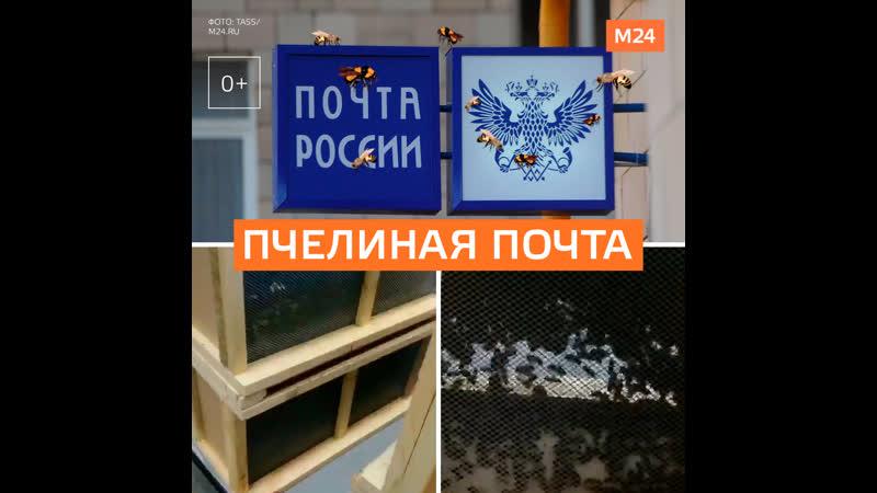 Посылки с пчёлами появились в «Почте России» - Москва 24