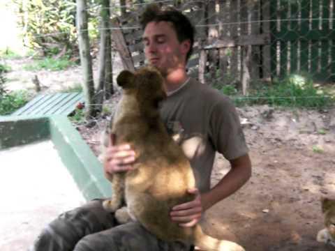 Lion Cubs hugs