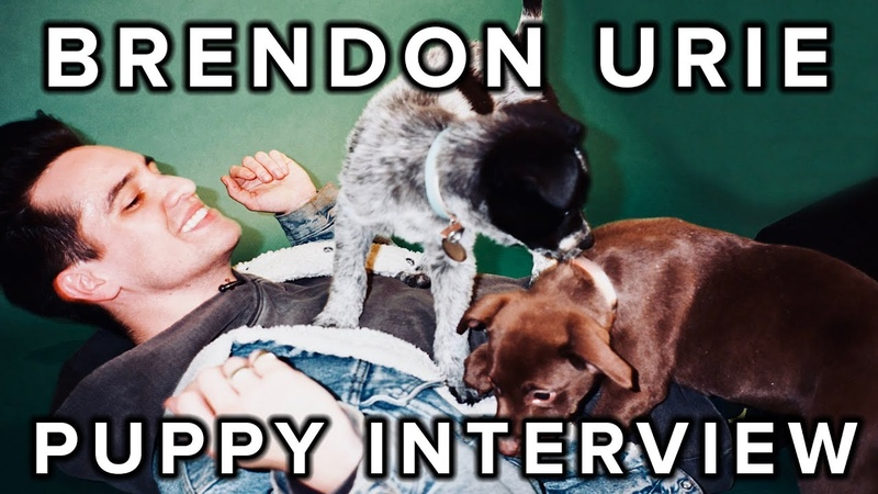 The Puppy Interview With Brendon Urie Of Panic! At The Disco
