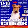 Выставка-шоу собак 23-24 декабря! пр.Жукова 44