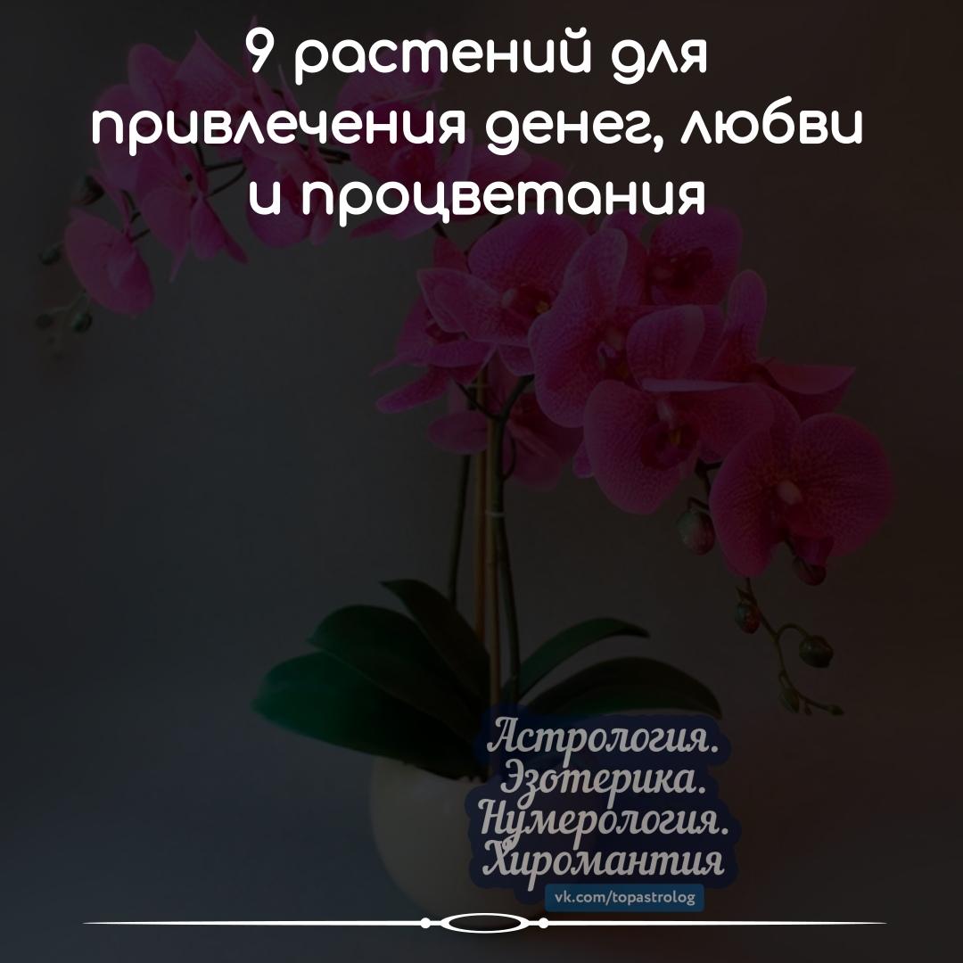 https://pp.userapi.com/c851236/v851236640/691b9/_WCDQdTf8xc.jpg