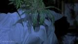 Scary Movie 2 (811) Movie CLIP - Marijuana Monster Tokes Shorty (2001) HD