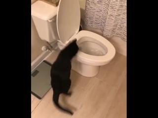 Я плачу за воду, а он играет...