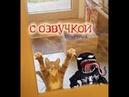 Приколы с котами – СМЕШНАЯ ОЗВУЧКА ЖИВОТНЫХ – ВЕНОМ против котов - DOMI SHOW