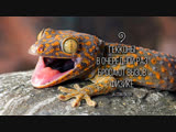 The_Geckos_Latest_Superpower_Revealed