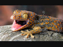The Geckos Latest Superpower Revealed