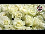 Юрий Шатунов - белые розы. КАРАОКЕ!!!