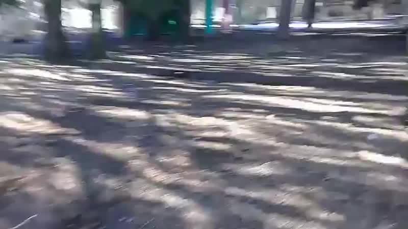школьный лес и обсуждение заборов