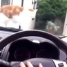 Cat Jumping from Horn to Marvin Gaye - Let's Get It On