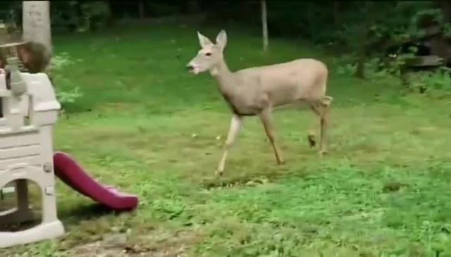 In The Deer Tonight