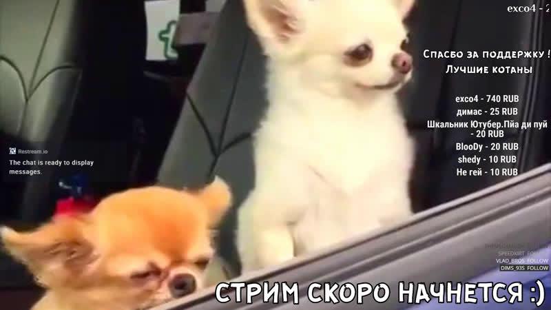 СТРИМ ДЕЙЗ HeadHunters ЧИТАЕМ ЧАТ/ DayZ Standalone бетку тестим чилим