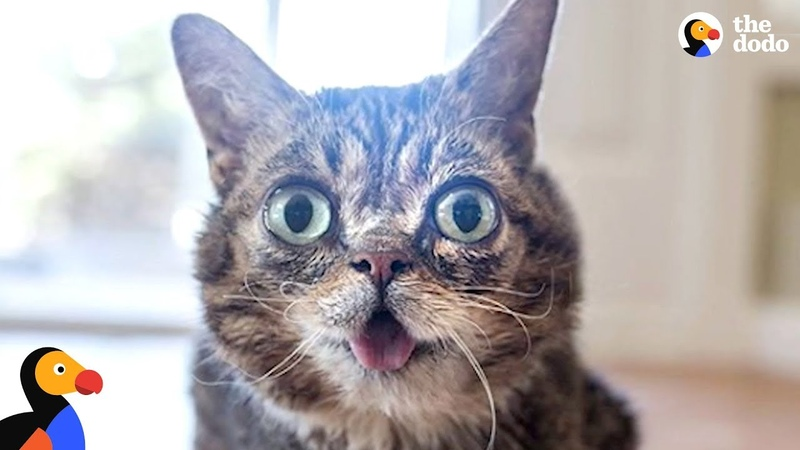 Cat's Unique Look Makes Her One In A Trillion - LIL BUB | The Dodo