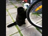 Колесо и котик
