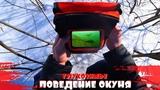 РЕАКЦИЯ и ПОВЕДЕНИЕ ОКУНЯ в ГЛУХОЗИМЬЕ Подводная съемка - CALYPSO