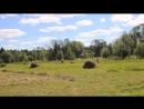 Сенокосная пора Республика Коми Прилузский район п Кыддзявидзь 20 07 2018