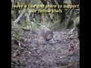 Its real kiwi hours