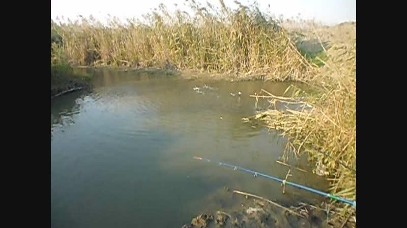 Рыбалка на хуторе Вестник.