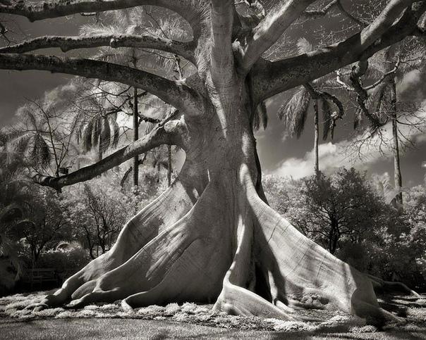 Фотопроект Бет Мун «Портреты времени»