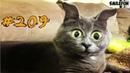 КОТЫ 2018 Смешные коты приколы с котами до слез – Смешные кошки – Funny Cats