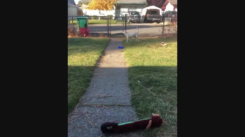 Глухая и слепая собака узнает когда хозяин приезжает домой