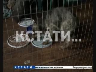 Массовая гибель животных в нелегальном приюте, который зоозащитники называют фабрикой смерти