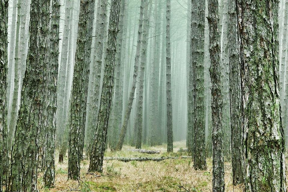 Арендаторам леса в Марий Эл настоятельно рекомендуют лучше работать