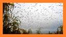 Птицы улетели на юг Этот прекрасный мир🐦