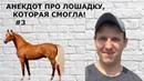 Анекдоты от KOBZA - 3 Анекдот про лошадку, которая смогла! Юмор. Приколы с животными. Анекдоты.