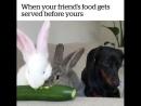 В гостях у братцев-кроликов