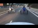 Cavalo caindo durante racha de charretes em Mairinque SP