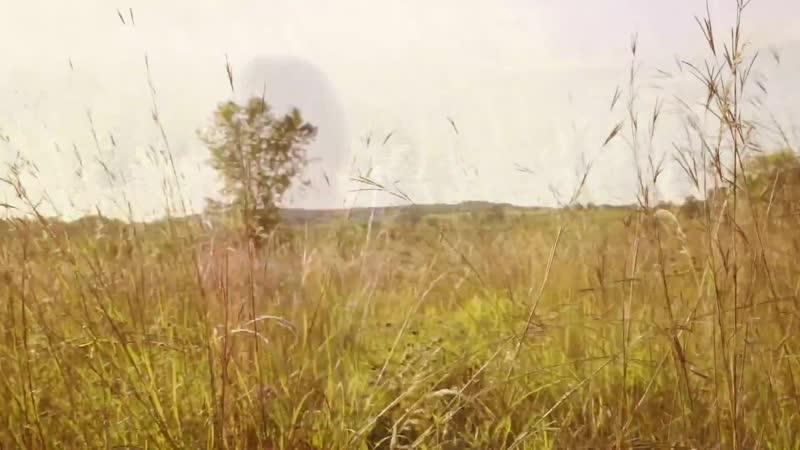 Sarah Longfield - Citrine