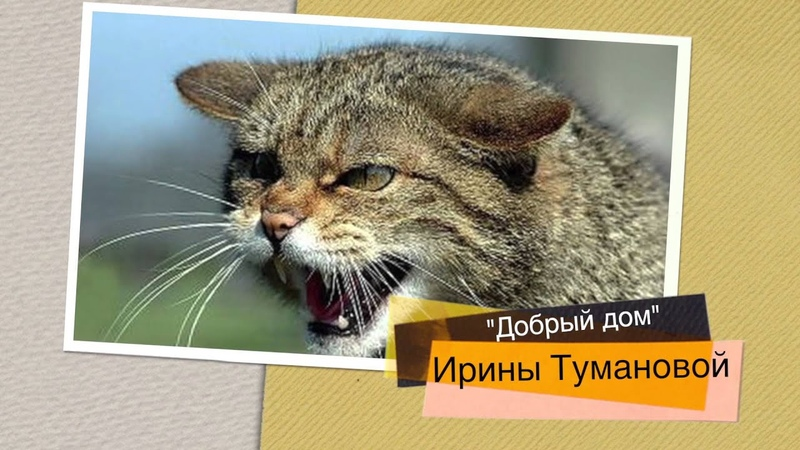 Детская программа / Kids TV show «Добрый дом» «Sweet Home» - Коты и кошки