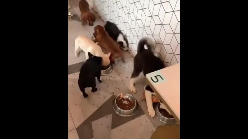 бешеный пёс )
