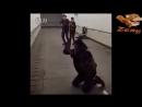 V-s.mobiЛучшие приколы с петардами best fun with firecrackers.mp4