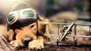 Расслабляющая музыка для собак Для того чтобы расслабиться и спать вашего питомца