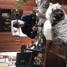 Mag_nikolaev video