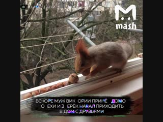 У доброй семьи в Краснодаре живет белочка Соня со своими друзьями