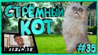 Странный, Стрёмный Кот / Weird, Creepy Cat [ Territory Fails ]