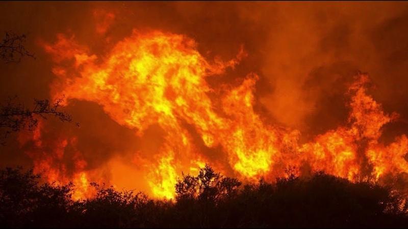Масштабна лісова пожежа в Чілі Масштабный лесной пожар в ЧилиLarge-scale forest fire in Chile