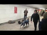 Собака в столичном метро подвыла под хит Джеймса Брауна