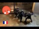 Путинские звери избивают митингующего в Париже