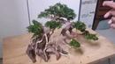 Hướng dẫn làm hồ thủy sinh bonsai hồ 60cm