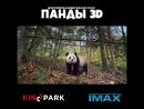 «Панды» - уже в Kinopark в IMAX 3D!