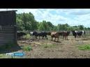 Йӗпреҫ районӗнчи фермер патшалӑх пулӑшӑвӗпе хуҫалӑхне аталантарать